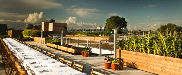 BTNGWN_Urban_farming_Zuidpark_2385