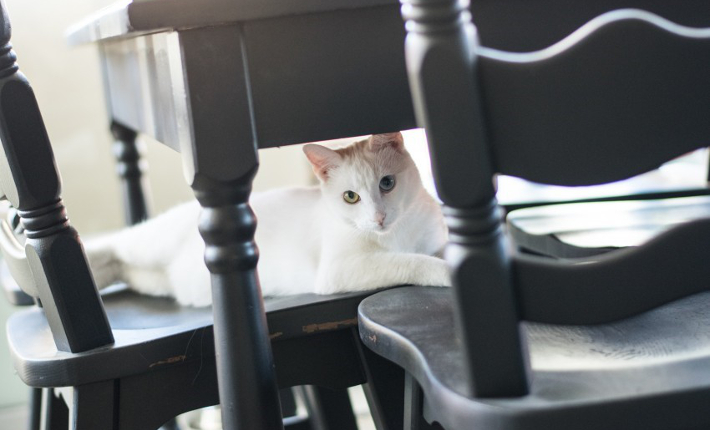 The Coffee Cat - credits Yabab's photography
