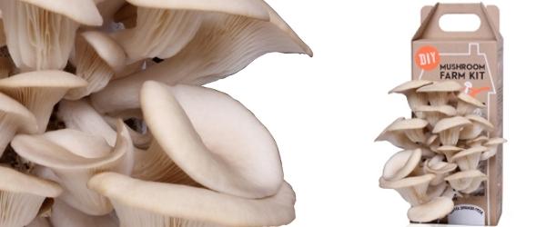 GRO Mushrooms